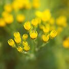 Yellow shines by Agnes McGuinness