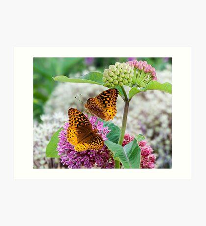 Great Spangled Fritillary Butterflies Art Print