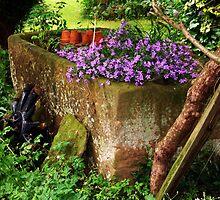 Garden by Kirsty Smith