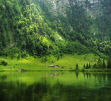 Green reflections by Béla Török