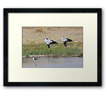 Pair of Secretary Birds,  Serengeti, Tanzania  Framed Print