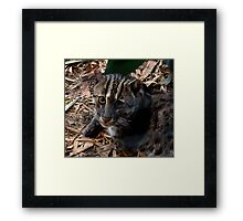 Awesome Fishing Cat Framed Print