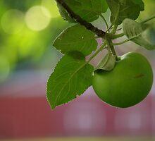 Green Apple  by Dawne Olson