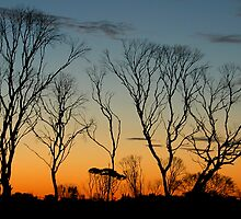 Nullarbor Sunset by Joy & Rob Penney