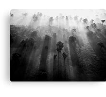 Through The Trees Comes The... (B/W) Canvas Print