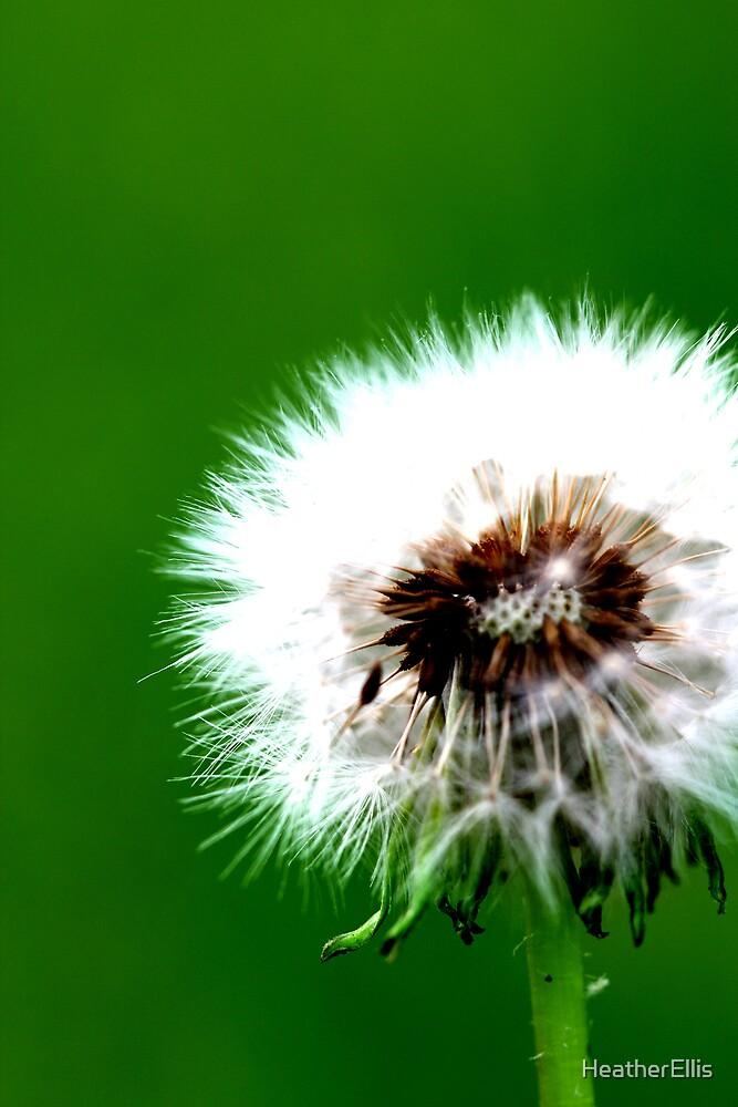 Baby Blossom by HeatherEllis