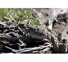 Horned Toad - 19415 Photographic Print