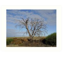 Dead tree in the middle of the outback Art Print