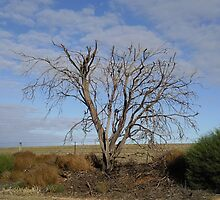 Dead tree in the middle of the outback by Annie Moore(Street)