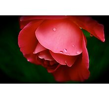 Raindrops on Roses Photographic Print