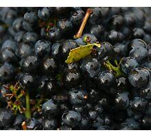 Grapes of Merlot Photographic Print