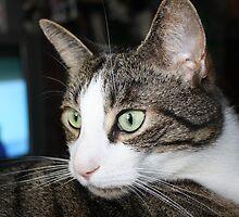 The vigilant cat by Tanja Katharina Klesse