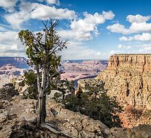 Grand Canyon & Lone Tree by eegibson