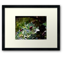 Purple Difference Framed Print