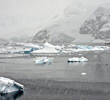 """Getting to old to be outside in this"" ~ Paradise Bay, Antarctica by Robert Elliott"