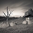Rabbit Rock vs. Mr Tree round 2 by Alistair Wilson