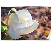 Wondrous White Magnolia Poster
