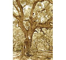 The Southern Live Oak Photographic Print