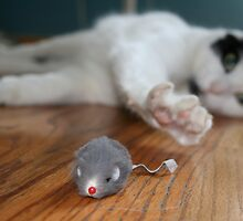 Marlow and mouse by Katerina Tassiopoulos