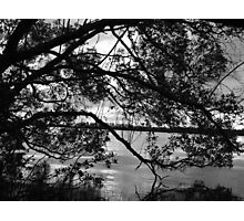 Mangrove Mystery Photographic Print