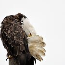 All about the Plumage - American Bald Eagle by Barbara Burkhardt