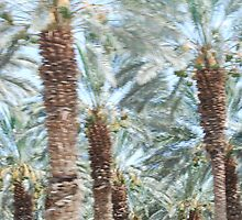 Dead Sea Palms by mstrasse