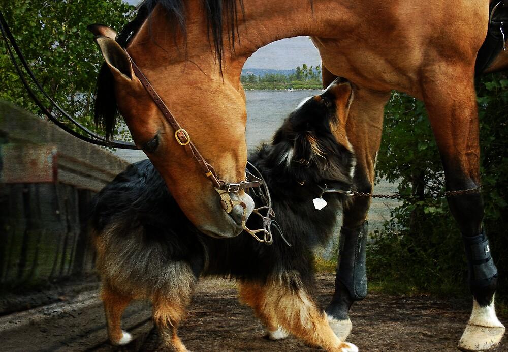Friendship is Universal  by Johanne Brunet