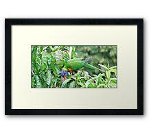 Nectarine thief Framed Print