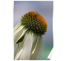 Pollen Galore Poster