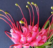 little groundcover grevillea by poshbeads