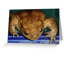 Bufo Bufo Clinging To The Edge Of A Swimming Pool Greeting Card