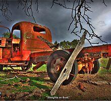 Steiglitz or Bust by Garry Quince