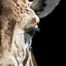 Giraffe by laurav