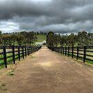 The Long Walk by GailD