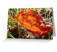red Dock leaf Greeting Card