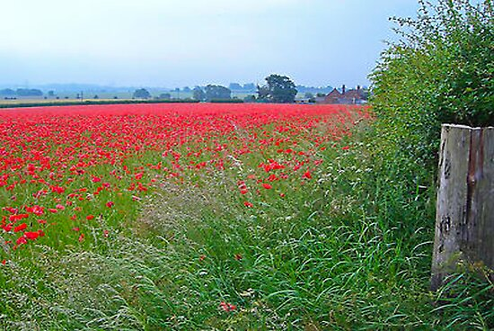Field of Rememberance by Trevor Kersley