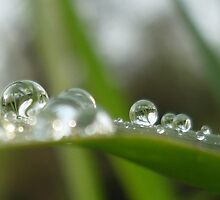 water drops by 2913