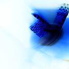Blue Phoenix by LionsRoar