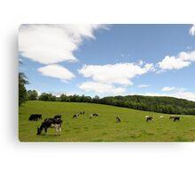 Rolling hillside---pasture in VT Canvas Print