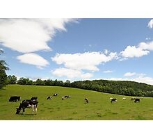 Rolling hillside---pasture in VT Photographic Print