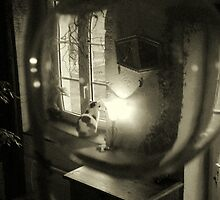 cat through a glass bubble by 2913