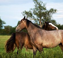 Two Horses by gfairbairn