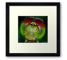 The Eyes of a Dragon Framed Print