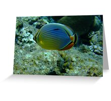 mellon butterfly fish Greeting Card