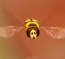 Hoverfly by Ian Chapman
