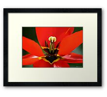 Red Is The Colour. Framed Print