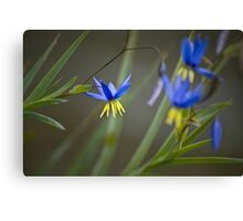 Nodding Blue Lily Canvas Print