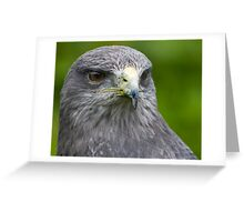Chilean blue eagle Greeting Card