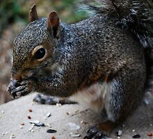 Gray Squirrel On My Doorstep...  by Angela Lance