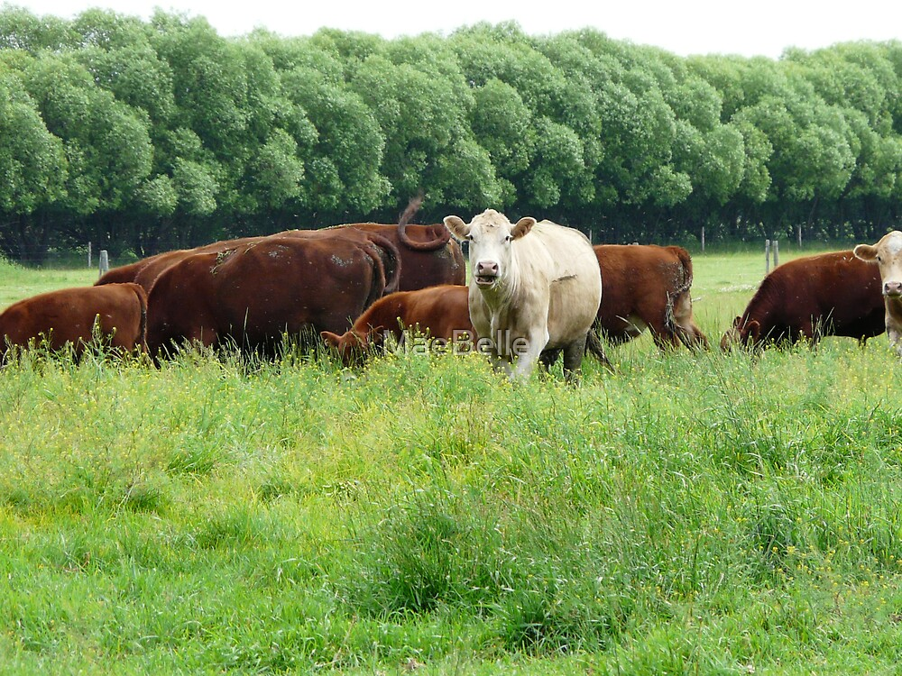 Cattle in Lush Pastures by MaeBelle